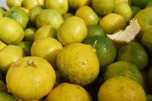 Mandarine Vert
